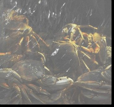 Anniversary Celebrations at Angry Crab Shack